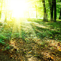 Heritage Cremation Society Obituaries Image - Sun Shining in the Woods